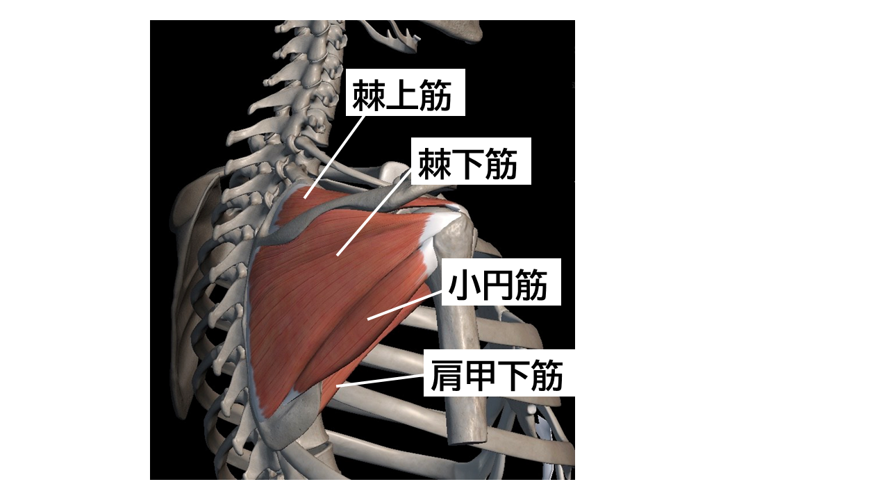 腱 板 損傷 肩